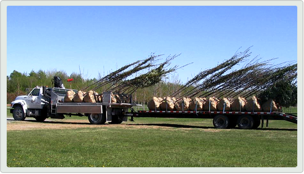 truck carrying trees